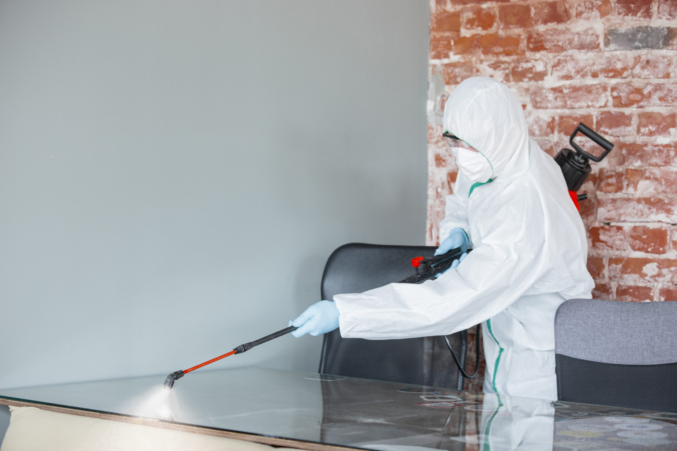 Get rid of bed bug