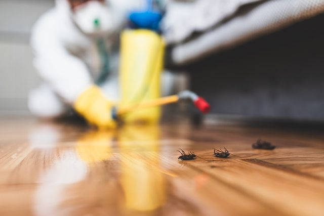 Bed Bug Specialists in Scugog