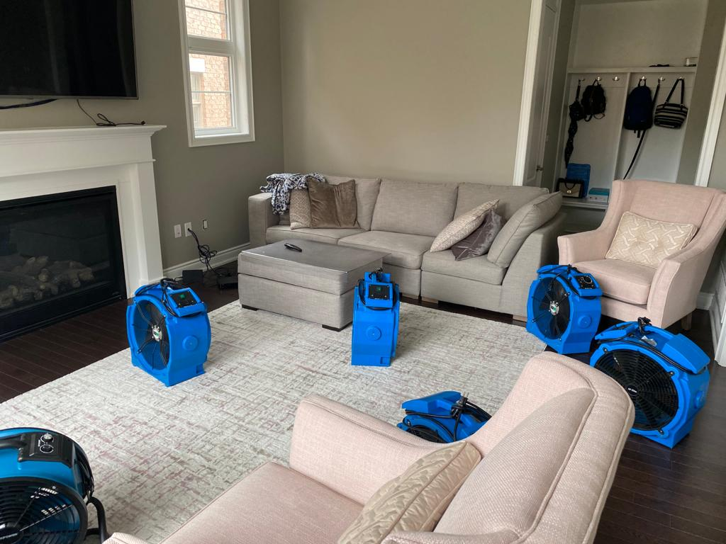 Bed Bug Treatment - Pickering