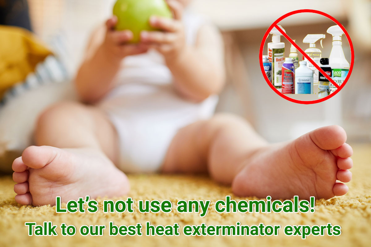 Non Chemical Bed Bug Treatments