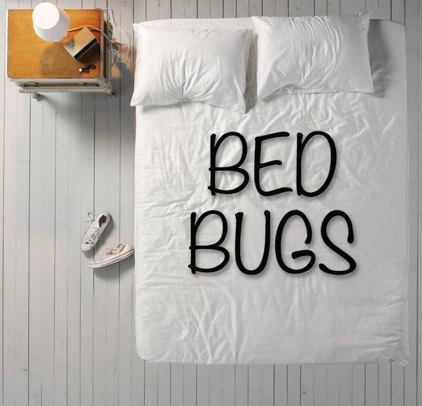 Bed bug heat treatment Woodbridge